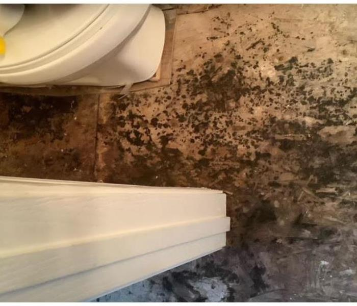 mold on subfloor wood