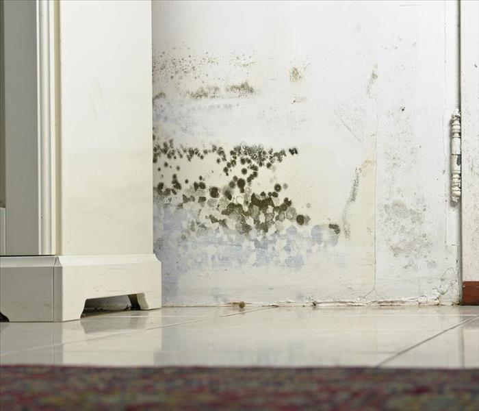 Mold Remediation Why Is It Important to Seek Professional Help After Mold Damage to Your Columbus Home?