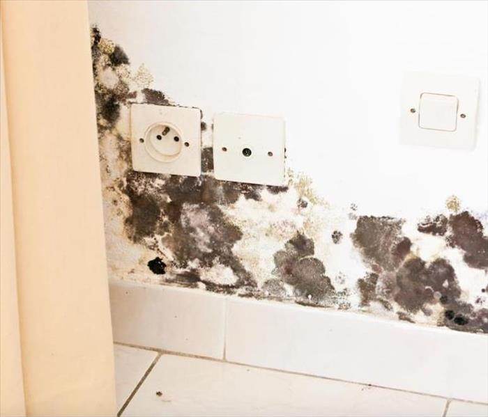Mold Remediation Mold Damage is More than Fuzzy Growths Underneath Your Kitchen Sink in Columbus
