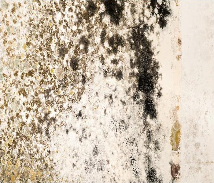 Mold Remediation Mold Damage Starts With A Tiny Colony In Your Columbus Residence