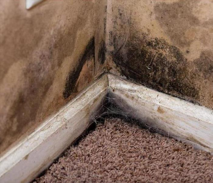 Mold Remediation Removing the Musty Odor From Mold Growth in Your Columbus Home