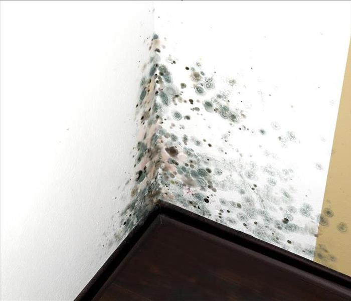 Commercial Aspects of Columbus Businesses that Make Them Vulnerable to Mold